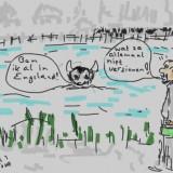 Zwemrecord Megense koe die de Maas bedwingt